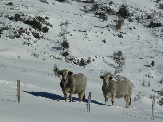 Notre élevage est extensif, avec des races adaptées aux montagnes des Pyrénées.