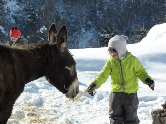 Dans les prés autour du village, vous pourrez voir nos ânes des Pyrénées et nos vaches Gasconnes.