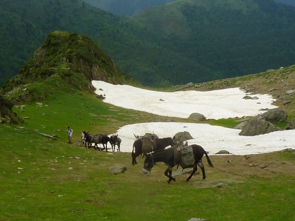 Portages en montagne avec les ânes batés de la ferme
