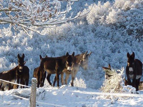 Un gite à la ferme aux ânes :  en hiver avec de la neige !