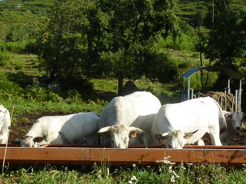 Visite de la ferme, à l'occasion d'un séjour au gîte dans nos montagnes d'Ariège