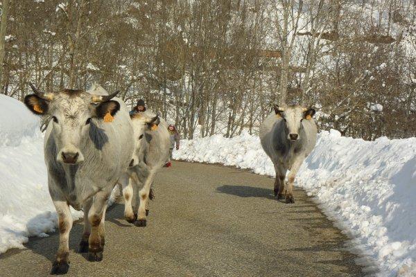 Avec cette neige, les déplacements sont plus simples par la route !
