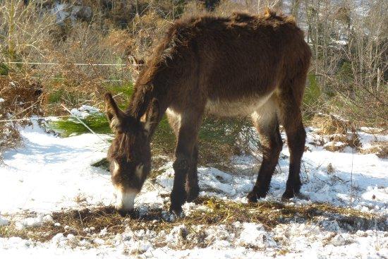 Un gîte à la ferme aux ânes en Haute Ariège