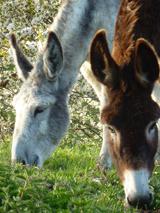 Les ânes de la ferme ne sont jamais très loin du gîte !