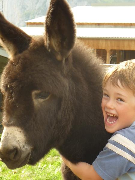 Au gîte avec un âne : prenez le temps de gros calins et de belles balades avec un âne de la ferme