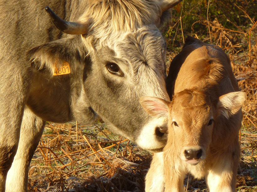 Notre gîte de montagne pour découvrir le troupeau de vaches gasconnes de la ferme